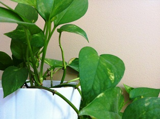 5 easy-care houseplants for your chronic pain toolkit   pain camp